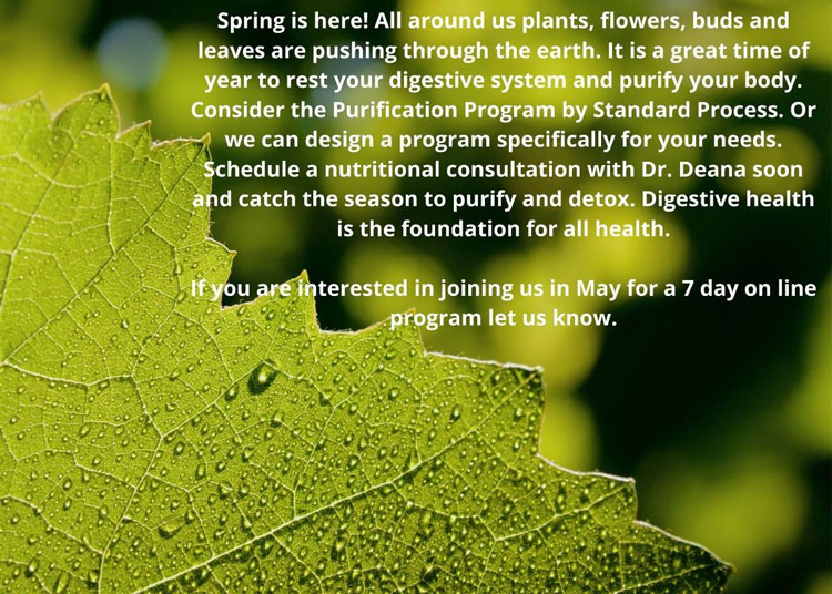 A Garden For Wellness Spring Is Here